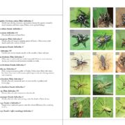 A field guide to Insects & Spiders of Kanha